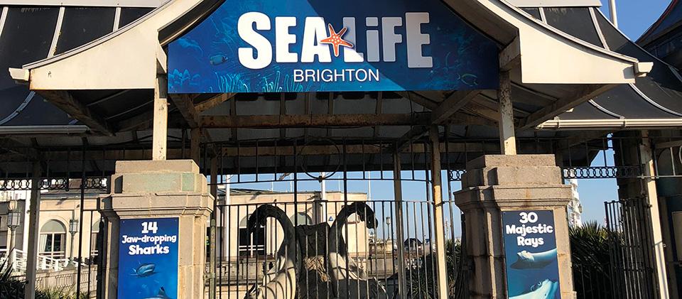 Brighton Sealife Centre